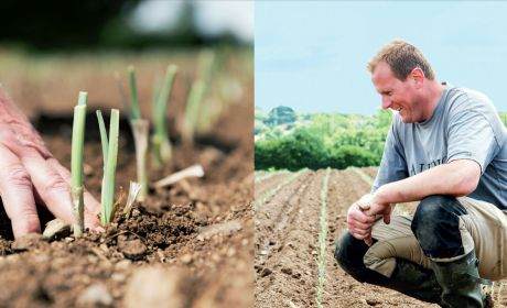 main dans la terre d'un champ de poireaux et agriculteur