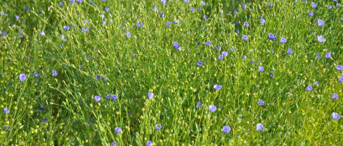 champ bio fleury michon