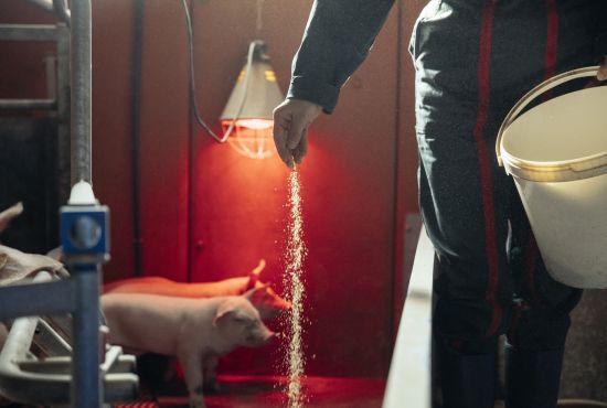 approvisionnement fournisseur roland j'aime porc engagement responsable fleury michon groupe manger mieux
