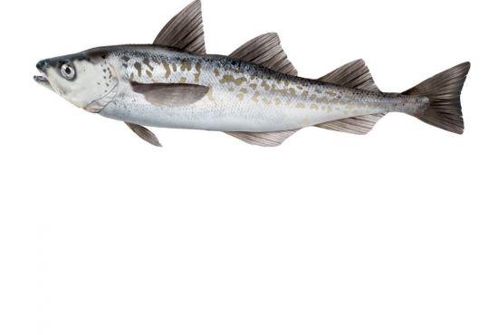 poissons surimi faq question fleury michon