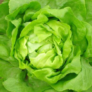 salades ou l gumes crus comment les conserver fleury. Black Bedroom Furniture Sets. Home Design Ideas