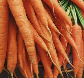 carottes tour de main joël robuchon manger mieux fleury michon